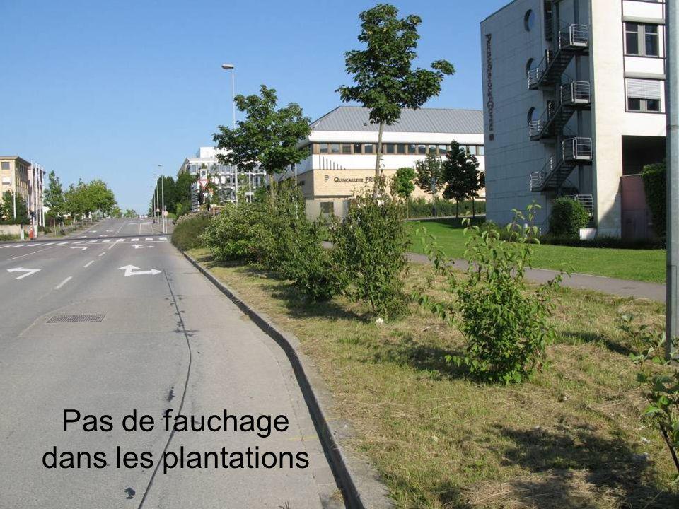 Pas de fauchage dans les plantations