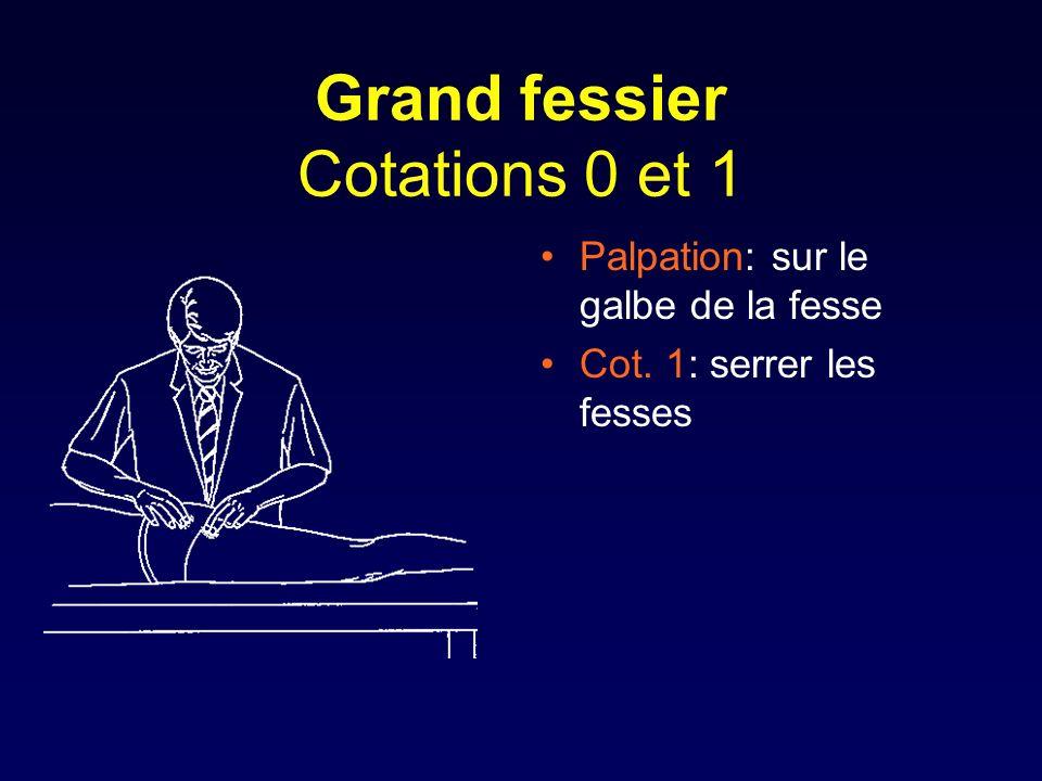 Grand fessier Cotations 0 et 1 Palpation: sur le galbe de la fesse Cot. 1: serrer les fesses