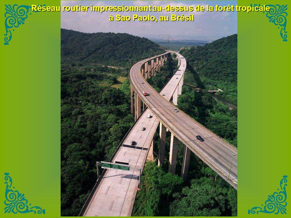 Réseau routier impressionnant au-dessus de la forêt tropicale à Sao Paolo, au Brésil