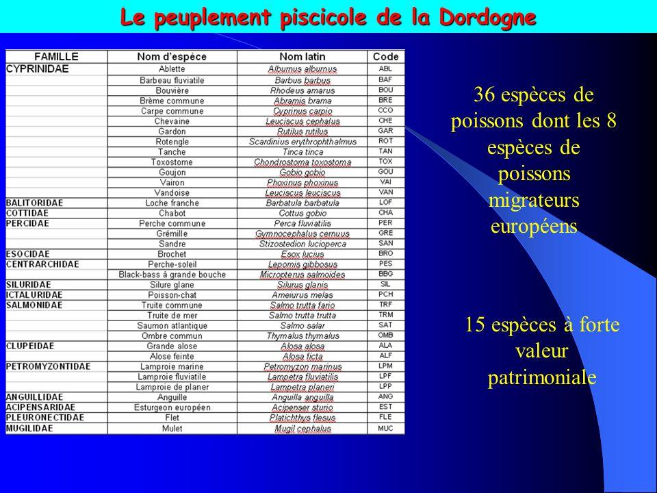 Le peuplement piscicole de la Dordogne 36 espèces de poissons dont les 8 espèces de poissons migrateurs européens 15 espèces à forte valeur patrimoniale