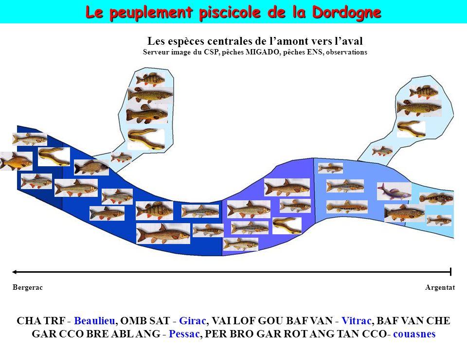 Le peuplement piscicole de la Dordogne ArgentatBergerac Les espèces centrales de lamont vers laval Serveur image du CSP, pêches MIGADO, pêches ENS, observations CHA TRF - Beaulieu, OMB SAT - Girac, VAI LOF GOU BAF VAN - Vitrac, BAF VAN CHE GAR CCO BRE ABL ANG - Pessac, PER BRO GAR ROT ANG TAN CCO- couasnes