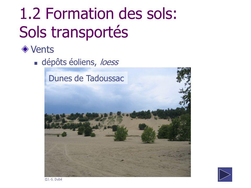 Vents dépôts éoliens, loess 1.2 Formation des sols: Sols transportés ©J.-S. Dubé Dunes de Tadoussac