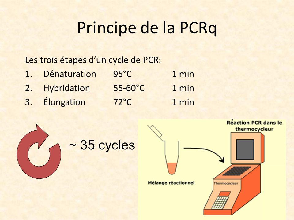 Principe de la PCRq Les trois étapes dun cycle de PCR: 1.Dénaturation95°C1 min 2.Hybridation 55-60°C1 min 3.Élongation72°C1 min ~ 35 cycles