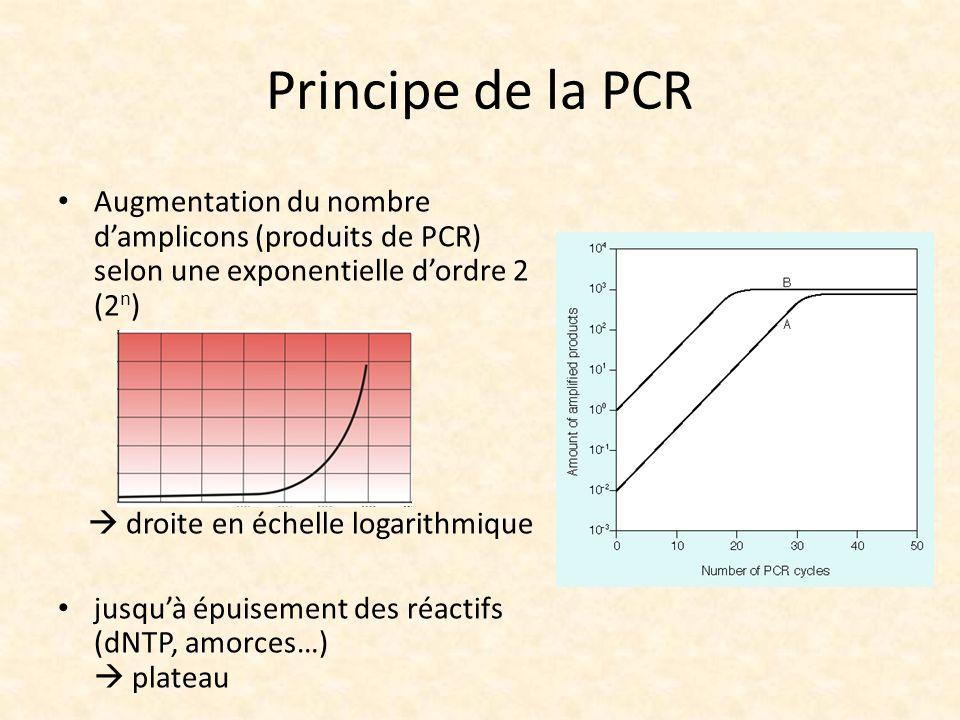 Principe de la PCR Augmentation du nombre damplicons (produits de PCR) selon une exponentielle dordre 2 (2 n ) droite en échelle logarithmique jusquà