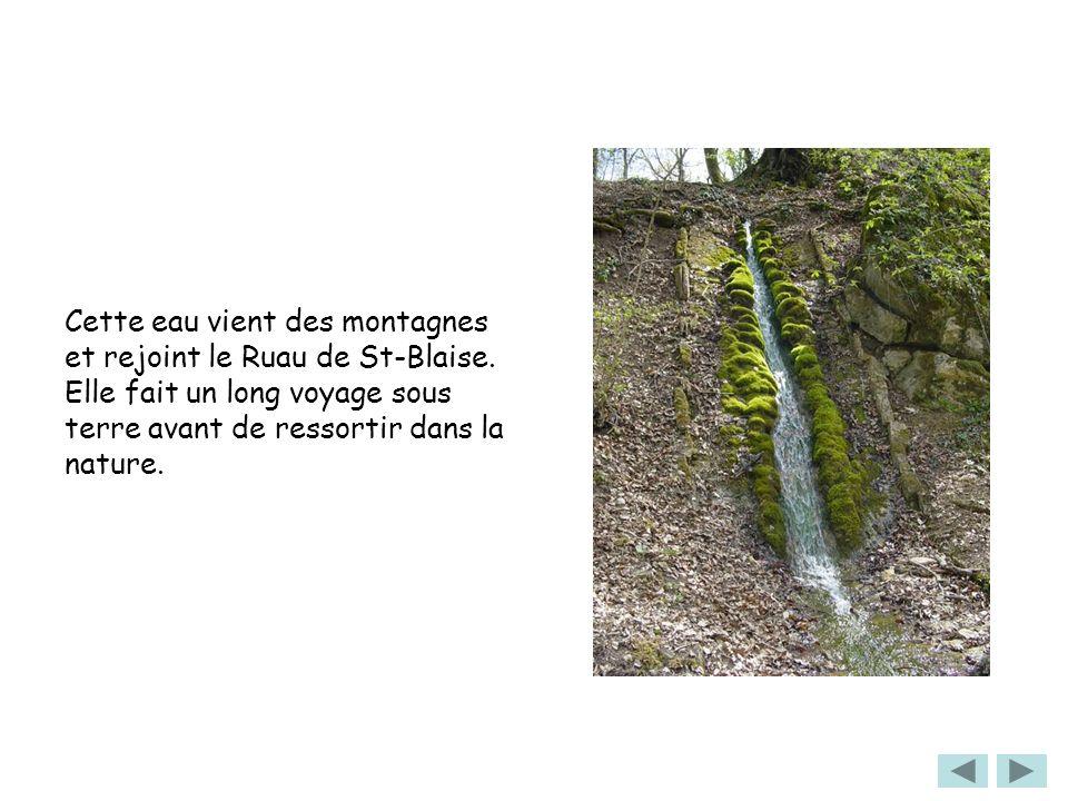 Cette eau vient des montagnes et rejoint le Ruau de St-Blaise. Elle fait un long voyage sous terre avant de ressortir dans la nature.