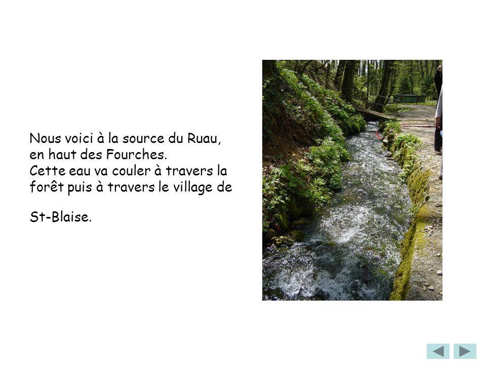 Nous voici à la source du Ruau, en haut des Fourches. Cette eau va couler à travers la forêt puis à travers le village de St-Blaise.