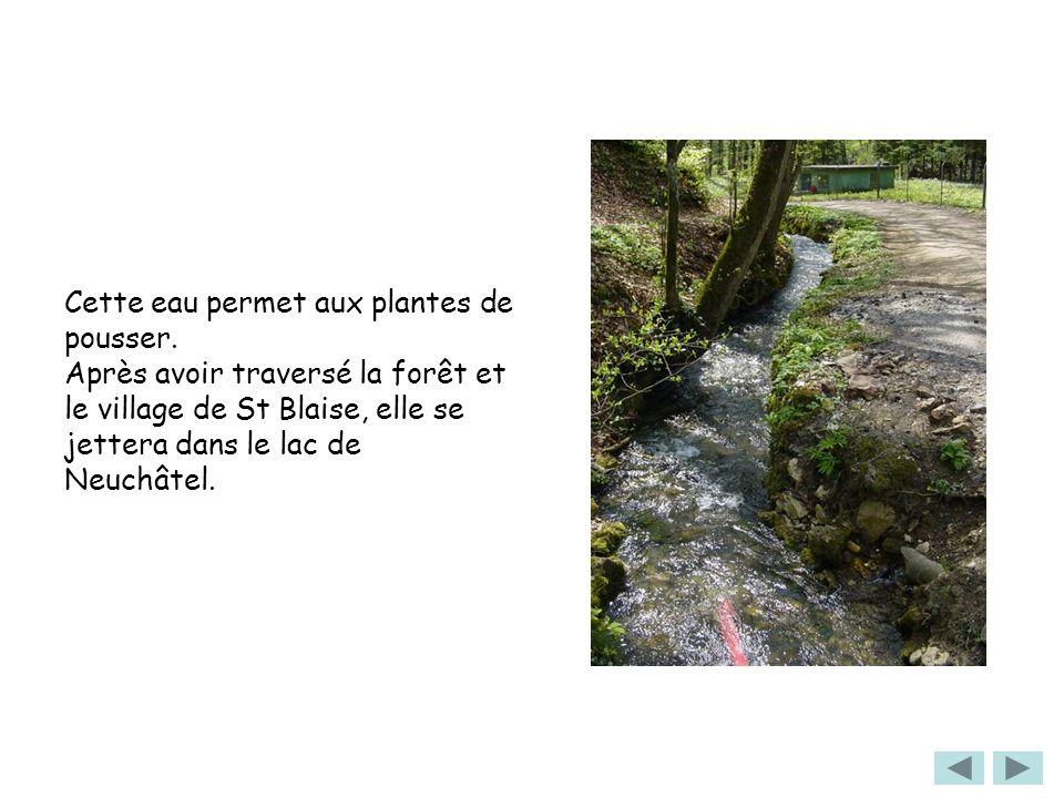 Cette eau permet aux plantes de pousser. Après avoir traversé la forêt et le village de St Blaise, elle se jettera dans le lac de Neuchâtel.