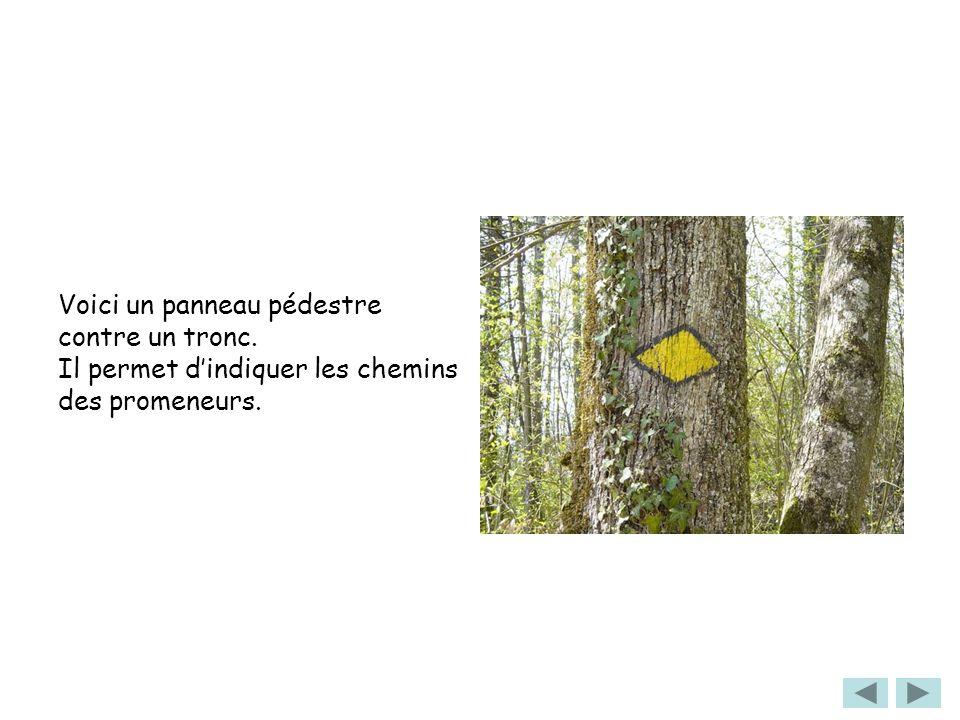 Voici un panneau pédestre contre un tronc. Il permet dindiquer les chemins des promeneurs.