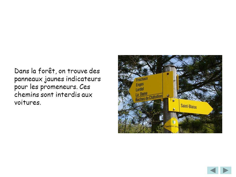 Dans la forêt, on trouve des panneaux jaunes indicateurs pour les promeneurs. Ces chemins sont interdis aux voitures.