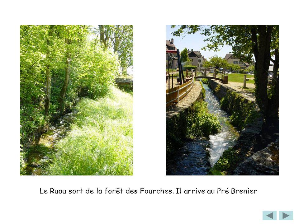 Le Ruau sort de la forêt des Fourches. Il arrive au Pré Brenier