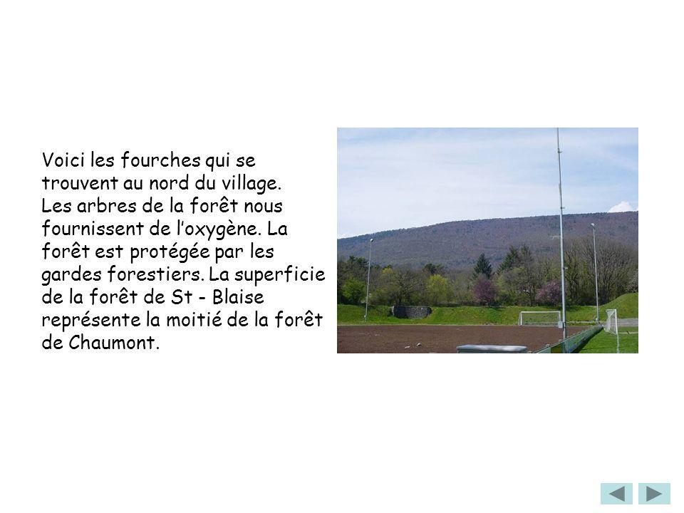 Voici les fourches qui se trouvent au nord du village. Les arbres de la forêt nous fournissent de loxygène. La forêt est protégée par les gardes fores