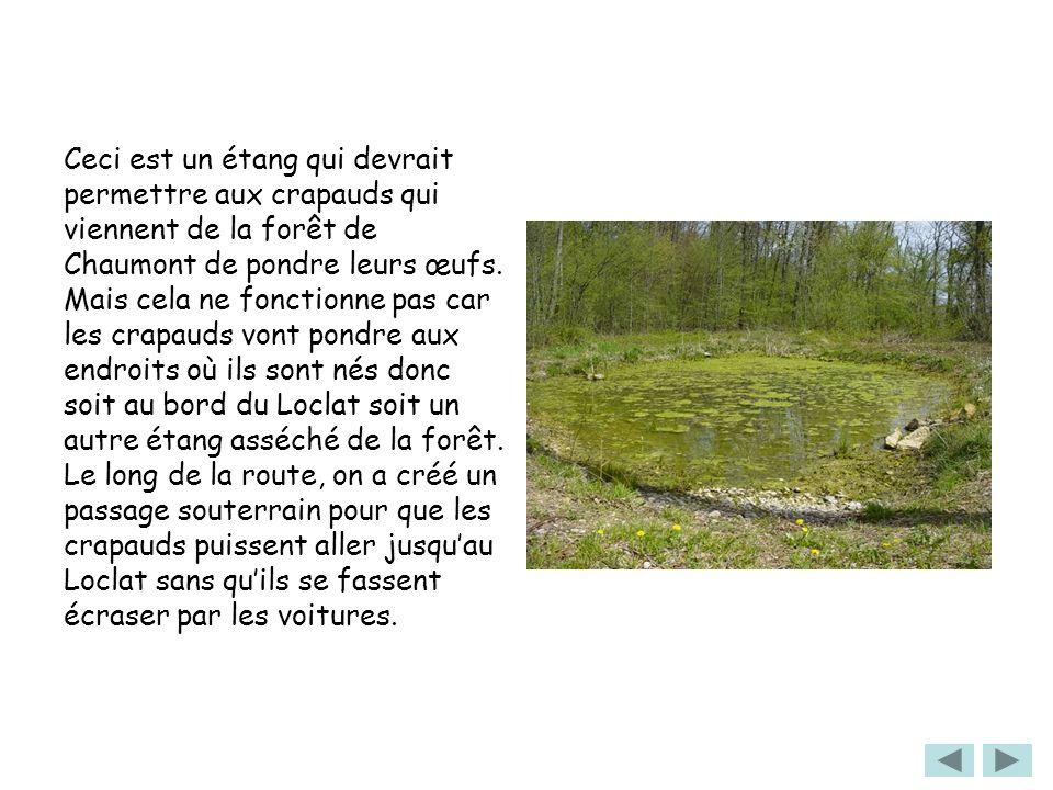 Ceci est un étang qui devrait permettre aux crapauds qui viennent de la forêt de Chaumont de pondre leurs œufs. Mais cela ne fonctionne pas car les cr