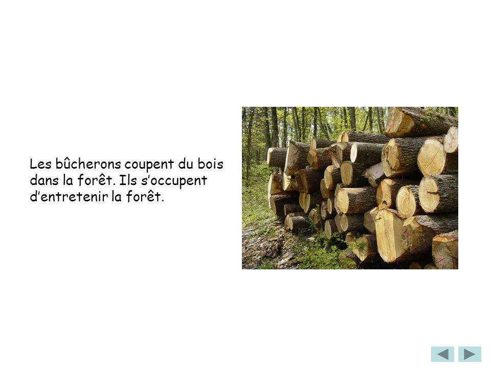 Les bûcherons coupent du bois dans la forêt. Ils soccupent dentretenir la forêt.