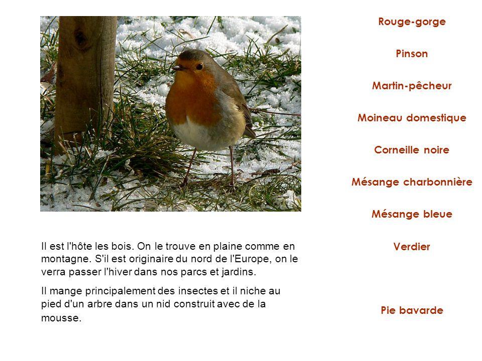 Rouge-gorge Martin-pêcheur Moineau domestique Mésange charbonnière Corneille noire Verdier Pie bavarde Pinson Mésange bleue Il est l'hôte les bois. On