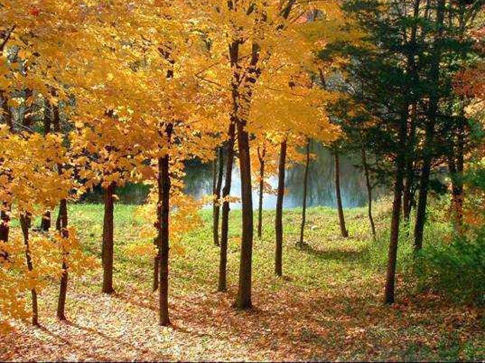 Quand automne en saison revient Quand automne en saison revient, La forêt met sa robe rousse Et les glands tombent sur la mousse Où dansent en rond le