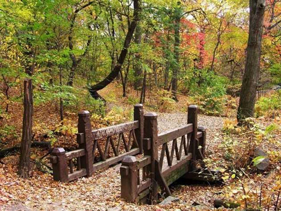 Les feuilles mortes Tombent, tombent les feuilles rousses, J'entends la pluie sur la mousse. Tombent, tombent les feuilles molles, J'entends le vent q