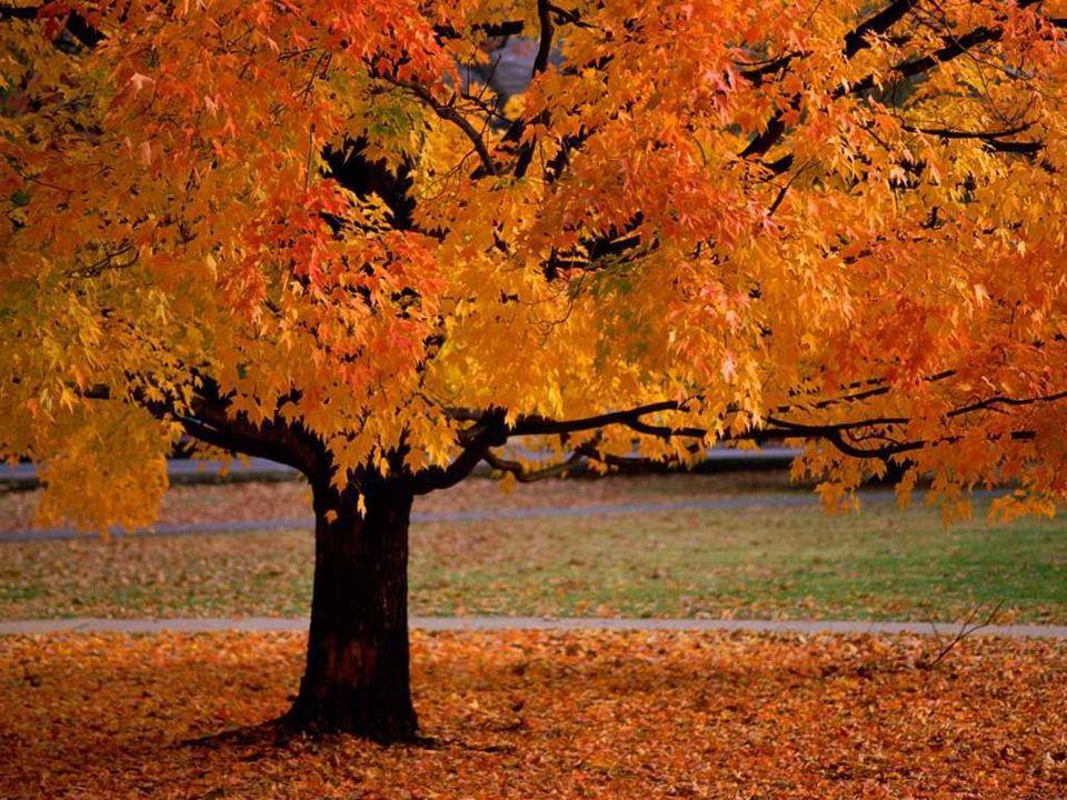 Les saisons Rouge, les feuilles de l'érable. Orange les champignons des bois. Jaune le soleil qui se voile. Marron, comme le tronc. Belles sont les co