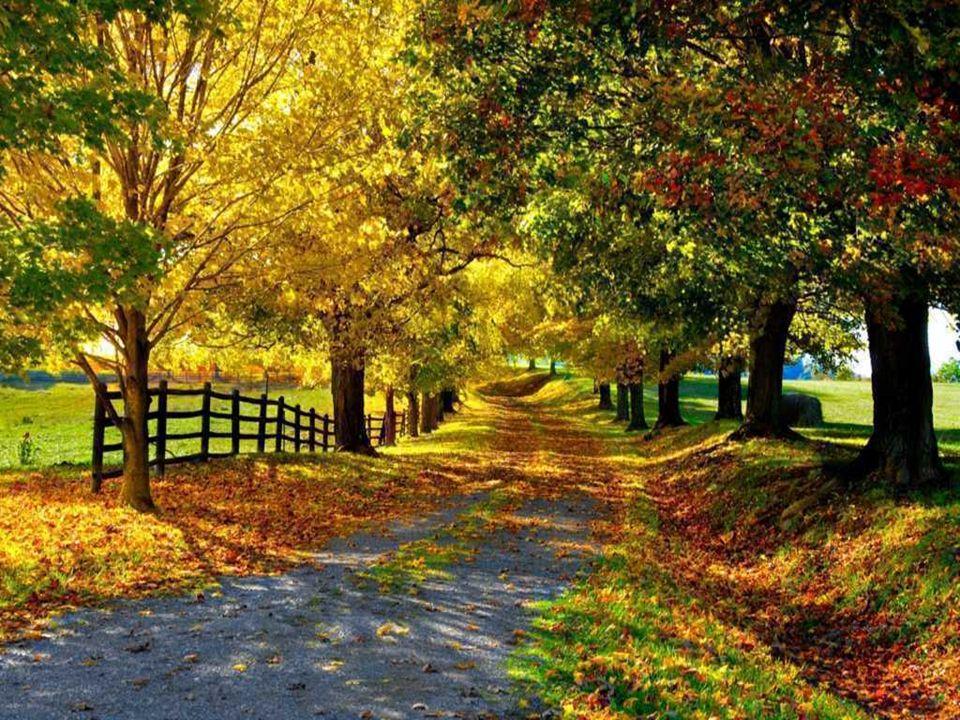 Matin doctobre Cest lheure exquise et matinale Que rougit un soleil soudain. A travers la brume automnale Tombent les feuilles du jardin. Leur chute e