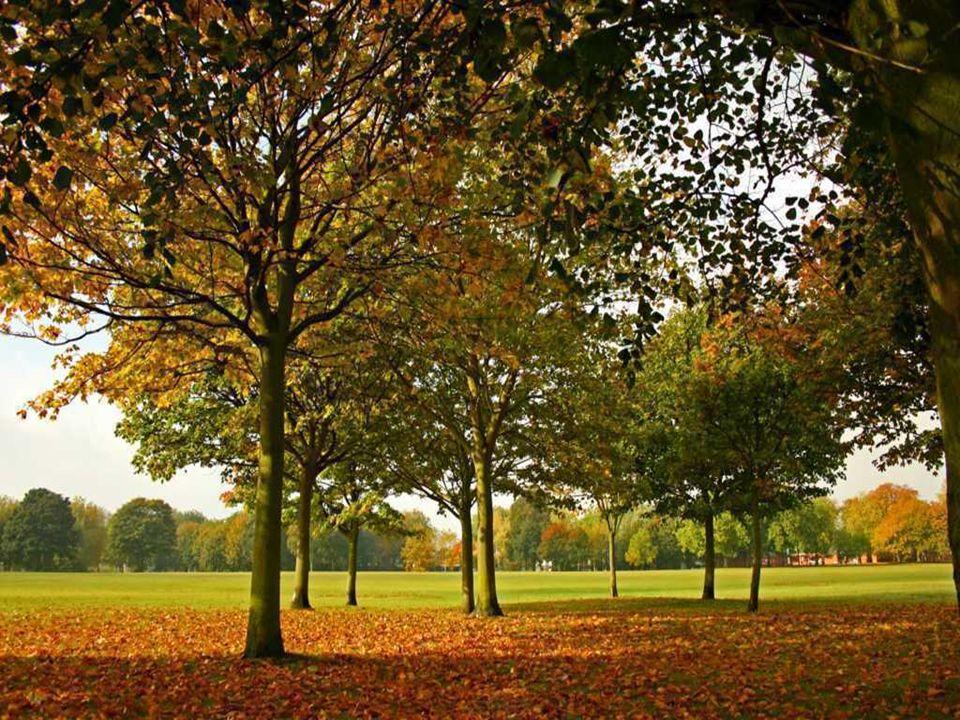 L'automne L'automne sur les ailes des oiseaux couleur de feuille et de forêt qui meurt une tendre rousseur une braise qui s'avive dans un lambeau de v