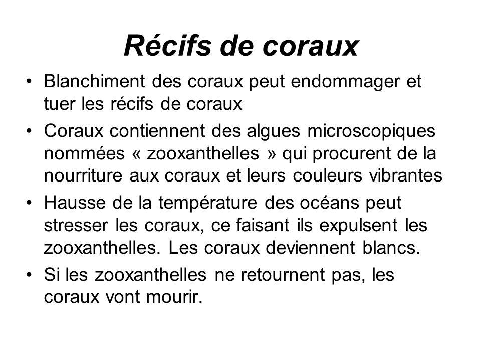 Récifs de coraux Blanchiment des coraux peut endommager et tuer les récifs de coraux Coraux contiennent des algues microscopiques nommées « zooxanthel