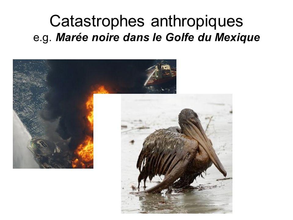 Catastrophes anthropiques e.g. Marée noire dans le Golfe du Mexique