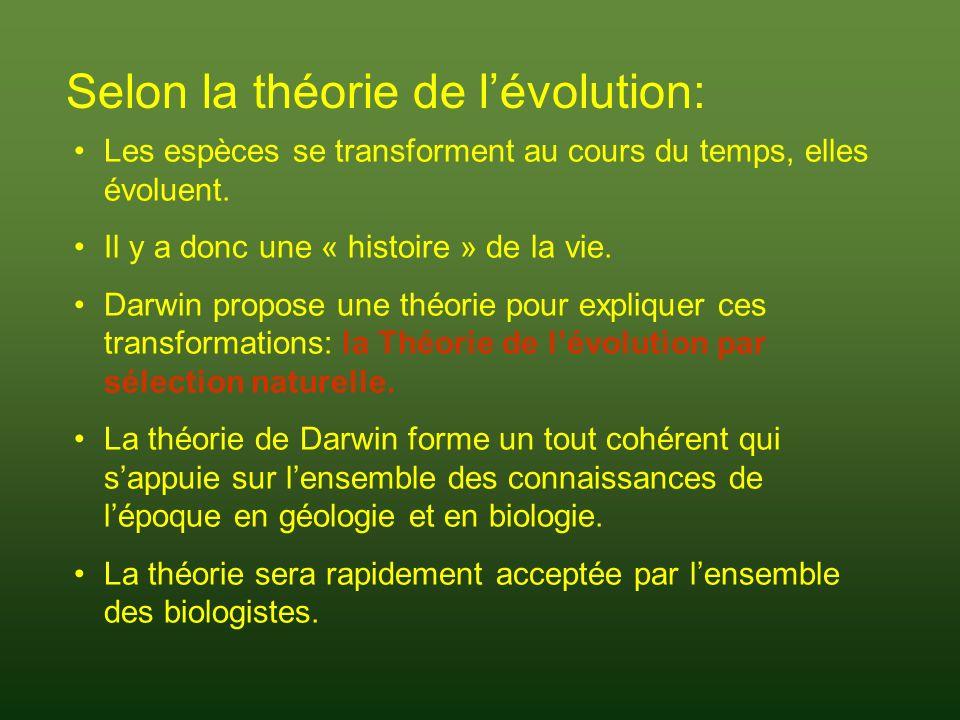 AVANT Darwin: Vision fixiste du monde et de la vie Platon (~428 - ~348) : Dualisme platonicien: monde réel et parfait des idées et monde illusoire, imparfait, accessible à nos sens Chaque individu dune espèce est une copie imparfaite dun modèle parfait et immuable appartenant au monde des idées Aristote (~384 - ~322) : Ne reprend pas le dualisme platonicien Mais, les espèces sont éternelles, immuables Les idées dAristote domineront la pensée judéo-chrétienne jusquau XIX e siècle