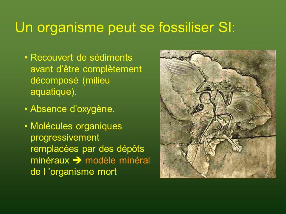 Strates géologiques Histoire de la vie Plus la strate géologique est profonde, plus elle est ancienne.