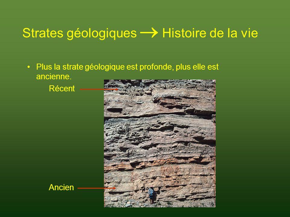 Strates géologiques Histoire de la vie Des strates les plus anciennes aux plus récentes: certaines espèces apparaissent, dautres disparaissent.