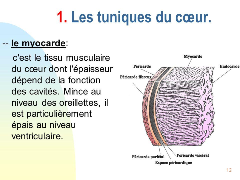 12 1. Les tuniques du cœur. -- le myocarde: c'est le tissu musculaire du cœur dont l'épaisseur dépend de la fonction des cavités. Mince au niveau des