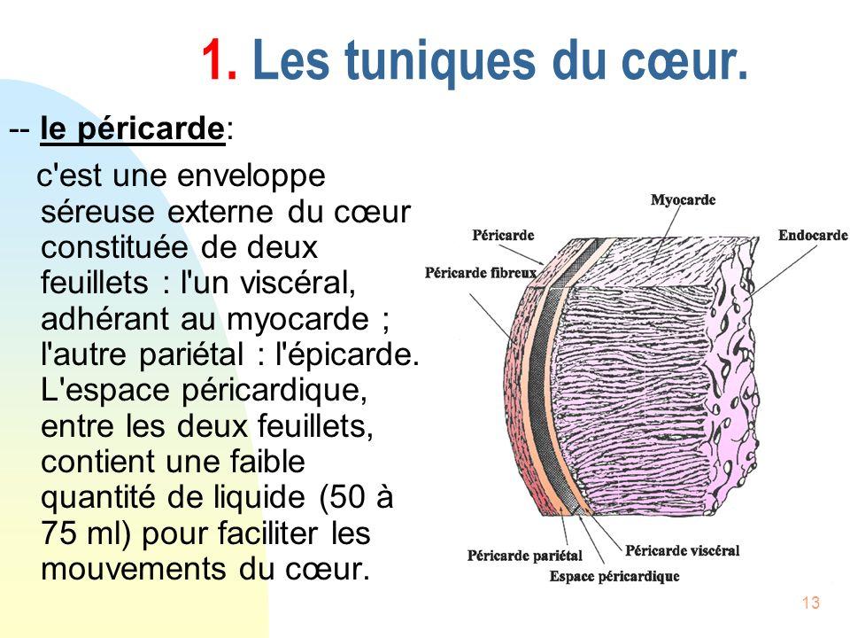 13 1. Les tuniques du cœur. -- le péricarde: c'est une enveloppe séreuse externe du cœur constituée de deux feuillets : l'un viscéral, adhérant au myo