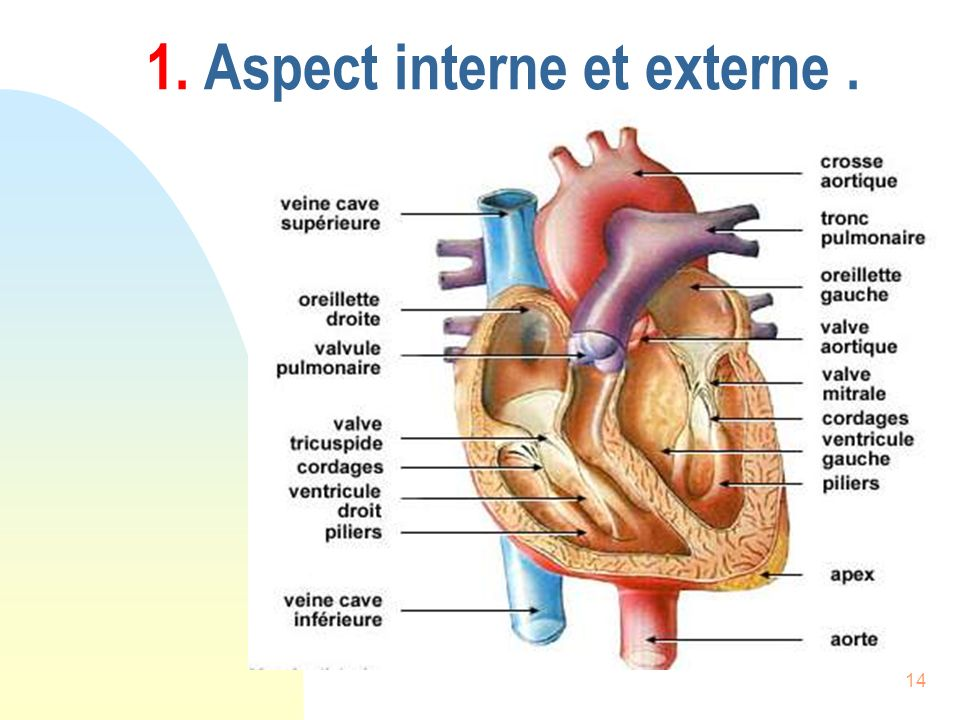 14 1. Aspect interne et externe.