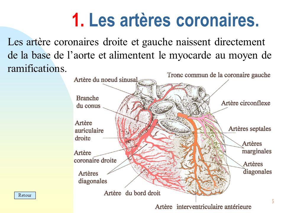 15 1. Les artères coronaires. Les artère coronaires droite et gauche naissent directement de la base de laorte et alimentent le myocarde au moyen de r