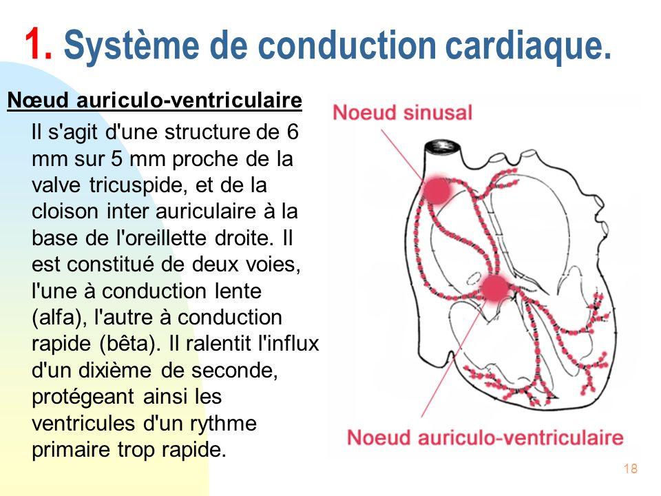 18 1. Système de conduction cardiaque. Nœud auriculo-ventriculaire Il s'agit d'une structure de 6 mm sur 5 mm proche de la valve tricuspide, et de la