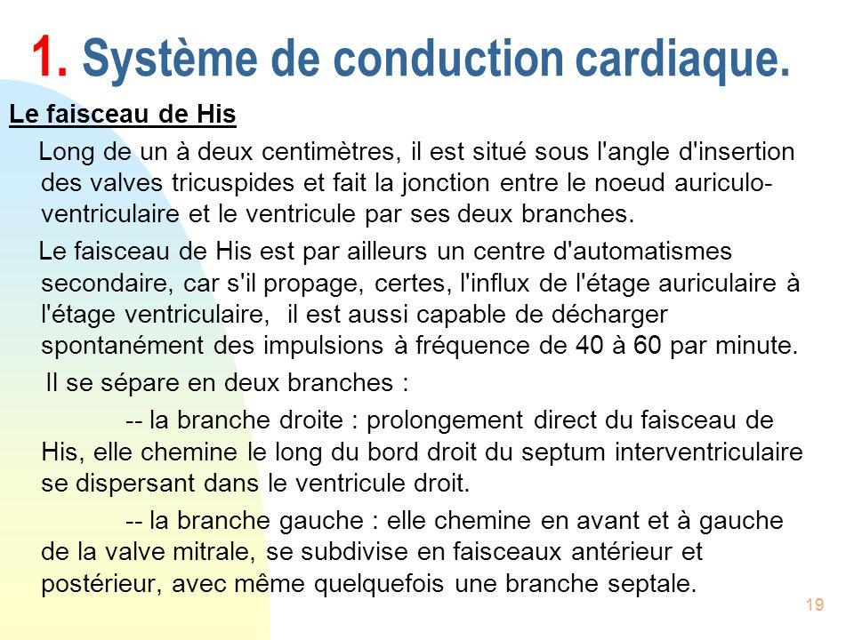 19 1. Système de conduction cardiaque. Le faisceau de His Long de un à deux centimètres, il est situé sous l'angle d'insertion des valves tricuspides