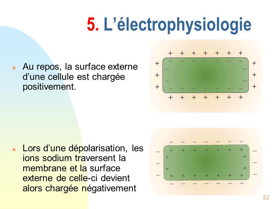 52 5. Lélectrophysiologie n Au repos, la surface externe dune cellule est chargée positivement. n Lors dune dépolarisation, les ions sodium traversent