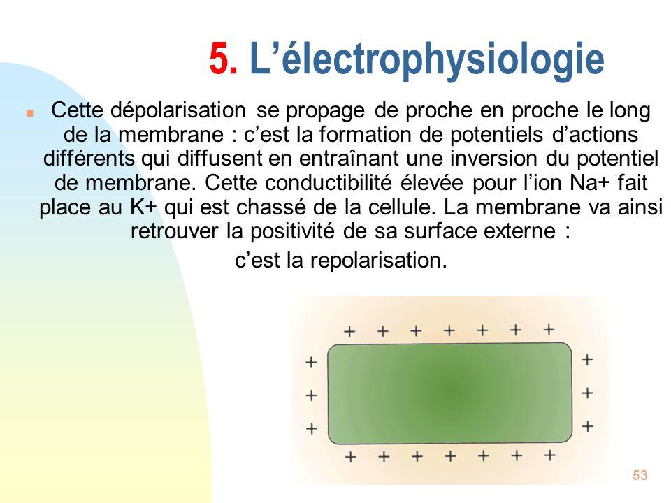 53 5. Lélectrophysiologie n Cette dépolarisation se propage de proche en proche le long de la membrane : cest la formation de potentiels dactions diff