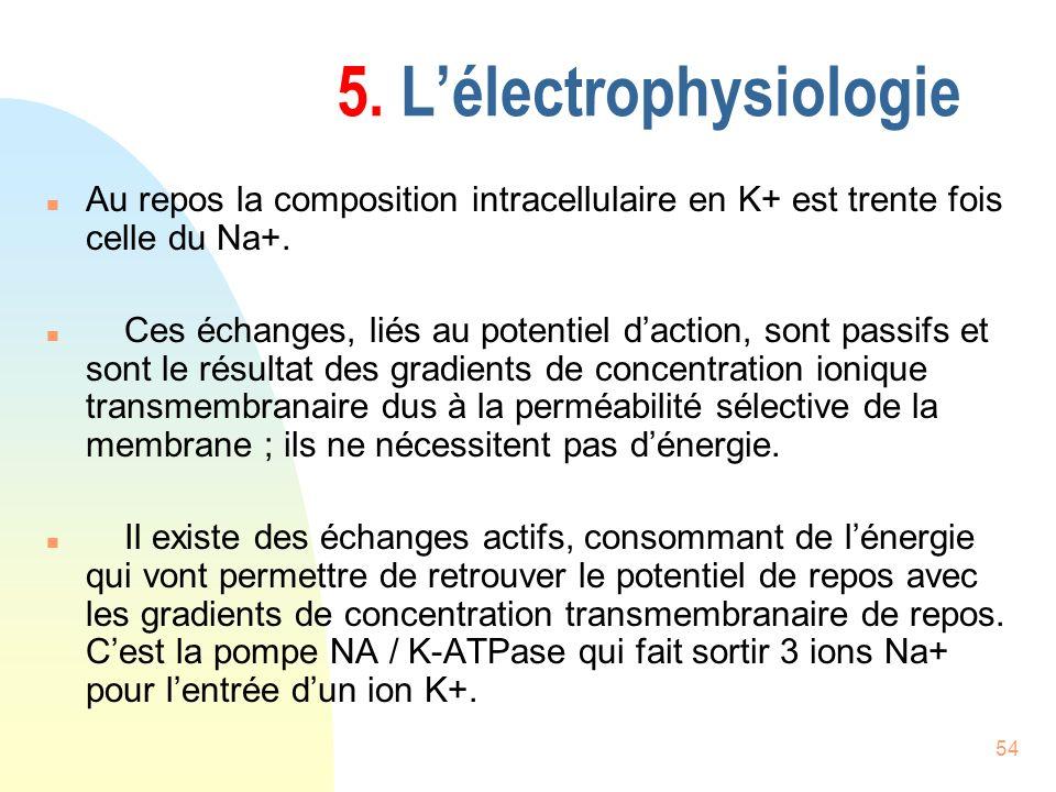 54 5. Lélectrophysiologie n Au repos la composition intracellulaire en K+ est trente fois celle du Na+. n Ces échanges, liés au potentiel daction, son