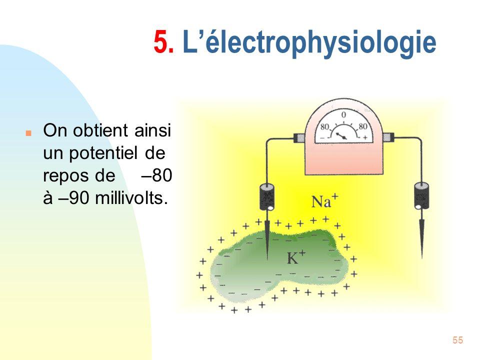 55 5. Lélectrophysiologie n On obtient ainsi un potentiel de repos de –80 à –90 millivolts.