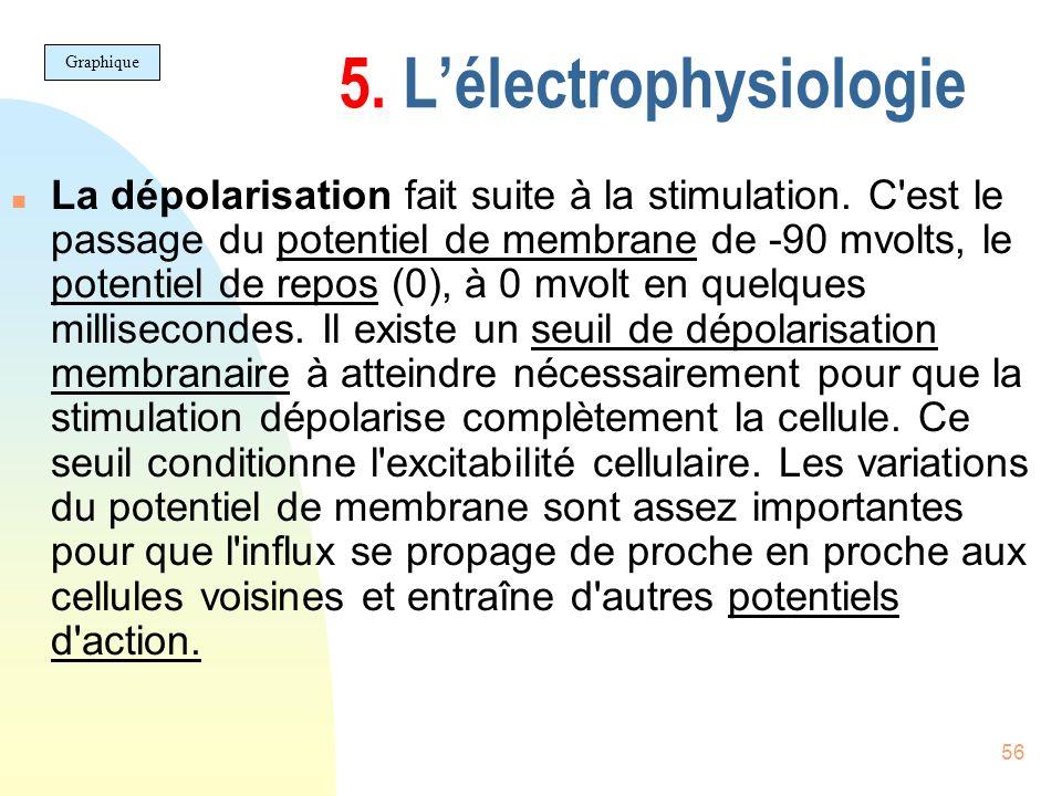 56 5. Lélectrophysiologie n La dépolarisation fait suite à la stimulation. C'est le passage du potentiel de membrane de -90 mvolts, le potentiel de re