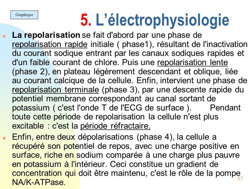 57 5. Lélectrophysiologie n La repolarisation se fait d'abord par une phase de repolarisation rapide initiale ( phase1), résultant de l'inactivation d