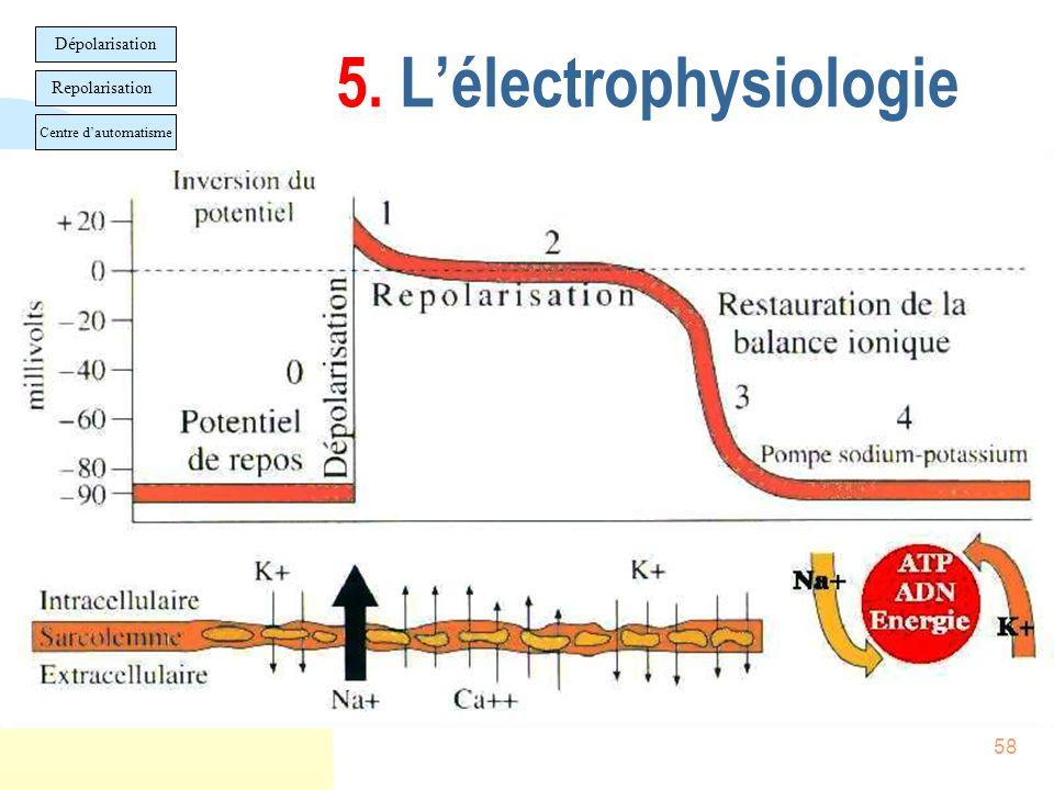 58 5. Lélectrophysiologie Dépolarisation Repolarisation Centre dautomatisme