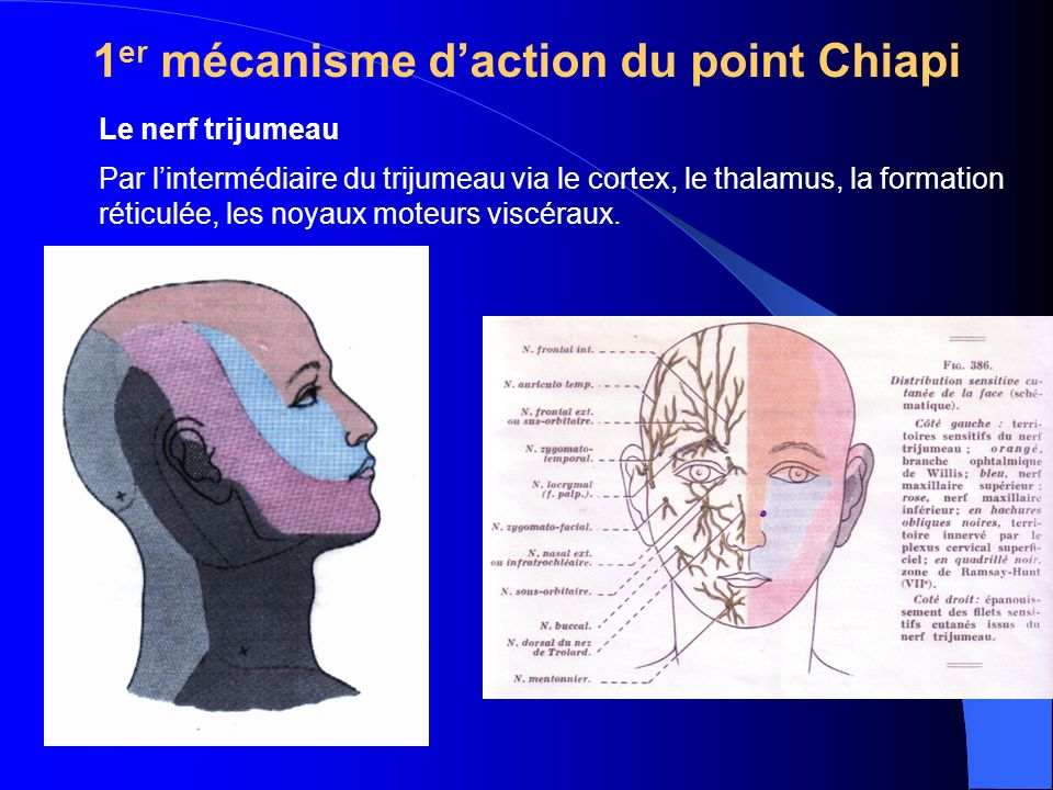 1 er mécanisme daction du point Chiapi Le nerf trijumeau Par lintermédiaire du trijumeau via le cortex, le thalamus, la formation réticulée, les noyaux moteurs viscéraux.