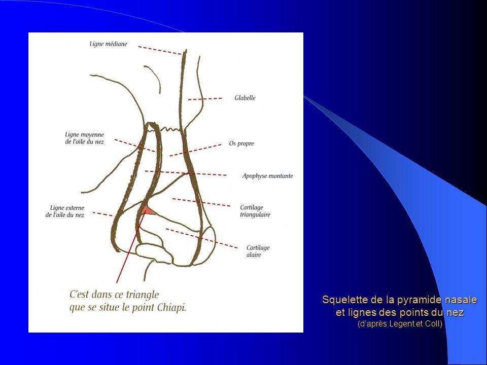 Squelette de la pyramide nasale et lignes des points du nez (daprès Legent et Coll)