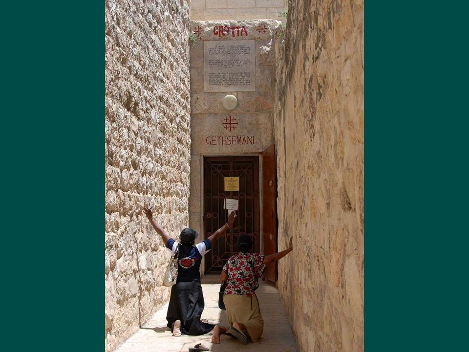 Le jardin de Gethsemanie (pressoir à huile en hébreu) est une oliveraie, Jésus y venait souvent, Judas qui le savait y conduisit ceux qui venaient lar