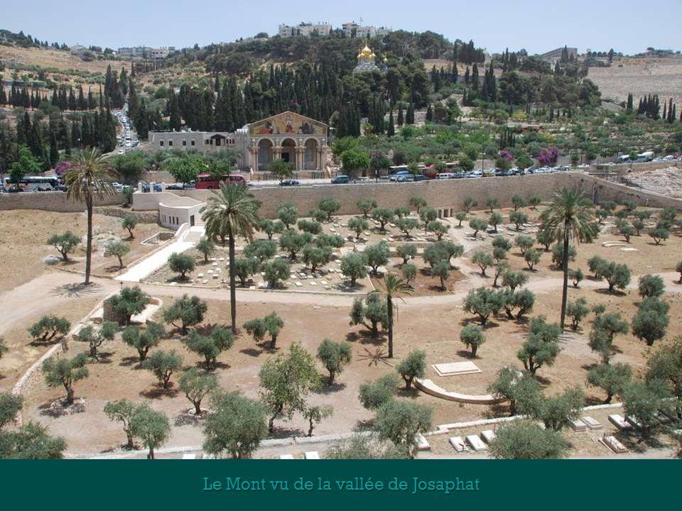 Le Mont des Oliviers est une colline qui pour chacun est associée aux religions juives et chrétiennes. De lépoque biblique à nos jours, des juifs (150