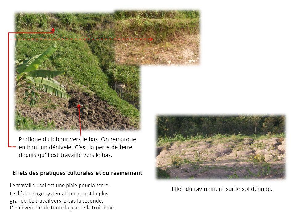 Effets des pratiques culturales et du ravinement Le travail du sol est une plaie pour la terre. Le désherbage systématique en est la plus grande. Le t