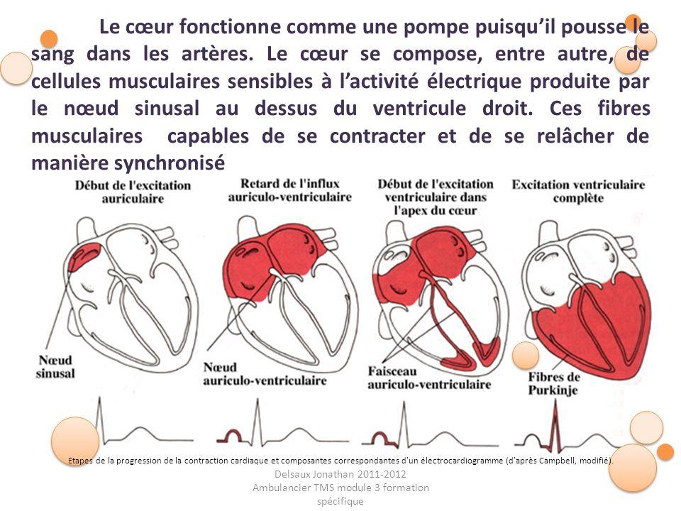 Delsaux Jonathan 2011-2012 Ambulancier TMS module 3 formation spécifique Fin… Le cœur fonctionne comme une pompe puisquil pousse le sang dans les artè