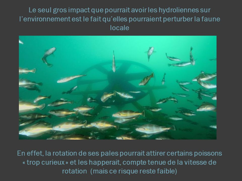 Le seul gros impact que pourrait avoir les hydroliennes sur lenvironnement est le fait quelles pourraient perturber la faune locale En effet, la rotation de ses pales pourrait attirer certains poissons « trop curieux » et les happerait, compte tenue de la vitesse de rotation (mais ce risque reste faible)