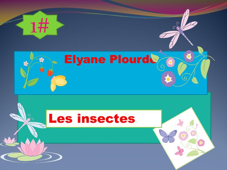 Elyane Plourde Les insectes 1#