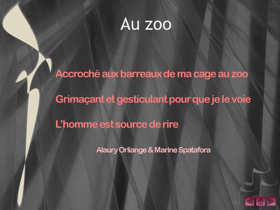 Accroché aux barreaux de ma cage au zoo Grimaçant et gesticulant pour que je le voie Lhomme est source de rire Alaury Orliange & Marine Spatafora